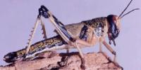 وضع الحشرات في المملكة الحيوانية