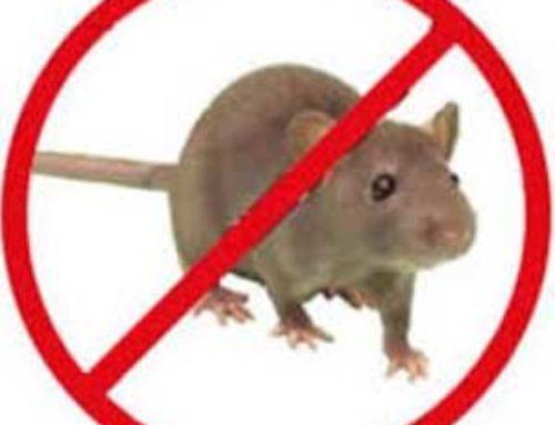 خدمة مكافحة الفئران بالرياض