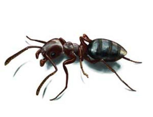 خدمة مكافحة النمل الاسود بالرياض