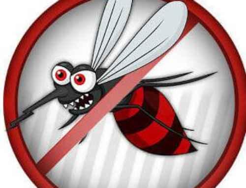 شركة مكافحة حشرات بالليث